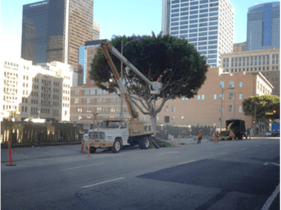 Rob's Tree Services & Removal Specialists of Orange County, Yorba Linda