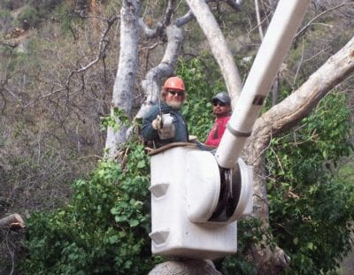 Lake Forest Tree Service . Removal - Rob's Tree Service of Orange County