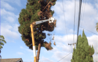 Aliso Viejo Tree Service - Rob's Tree Service of Orange County