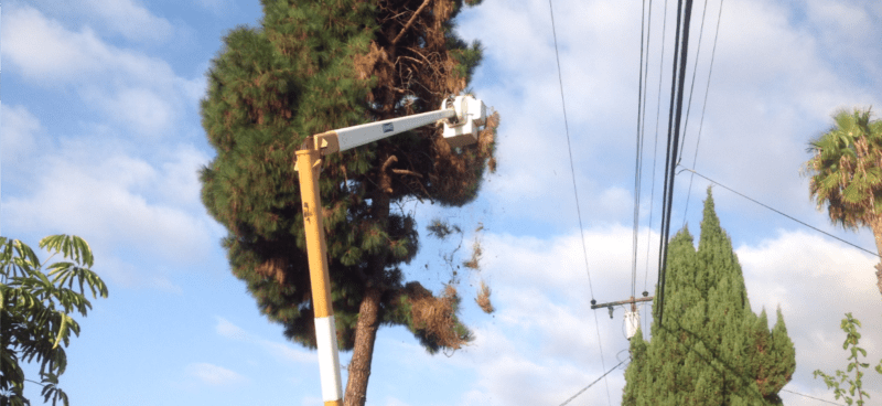 ullerton Tree Service - Rob's Tree Service of Orange County