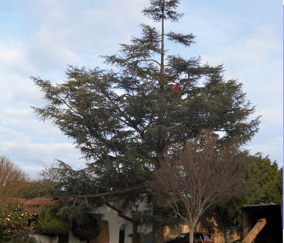 Tree Service in La Habra, CA - Rob's Tree Service of Orange County