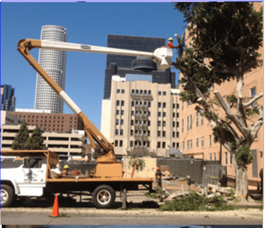 Glendora Tree Service, Removal - Rob's Tree Service of Orange County