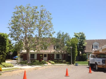 Tree Service Newport Beach - Rob's Tree Service of Orange County