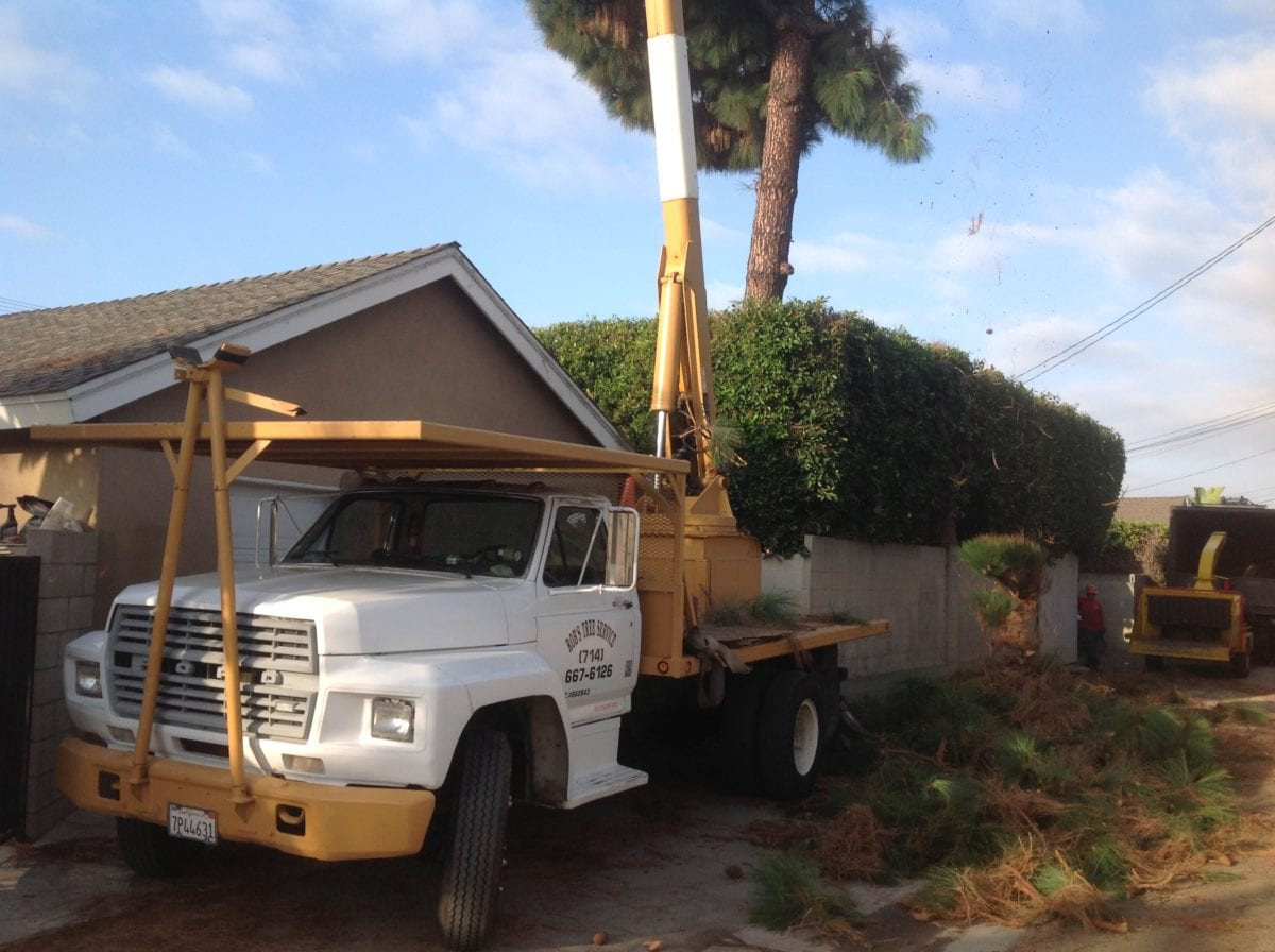 Fullerton Tree Service - Rob's Tree Service of Orange County