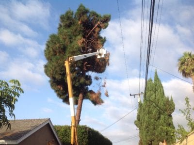 Los Alamitos Tree Service - Rob's Tree Service of Orange County
