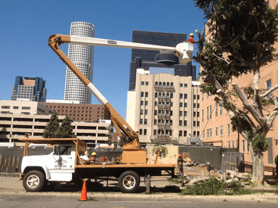 Commercial Tree Services - Rob's Tree Services of Orange County