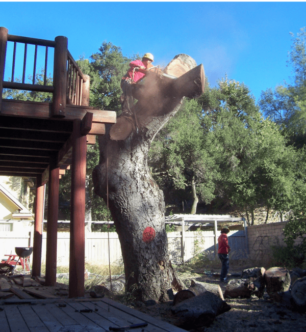 La Palma Tree Service, Removal - Rob's Tree Service of Orange County