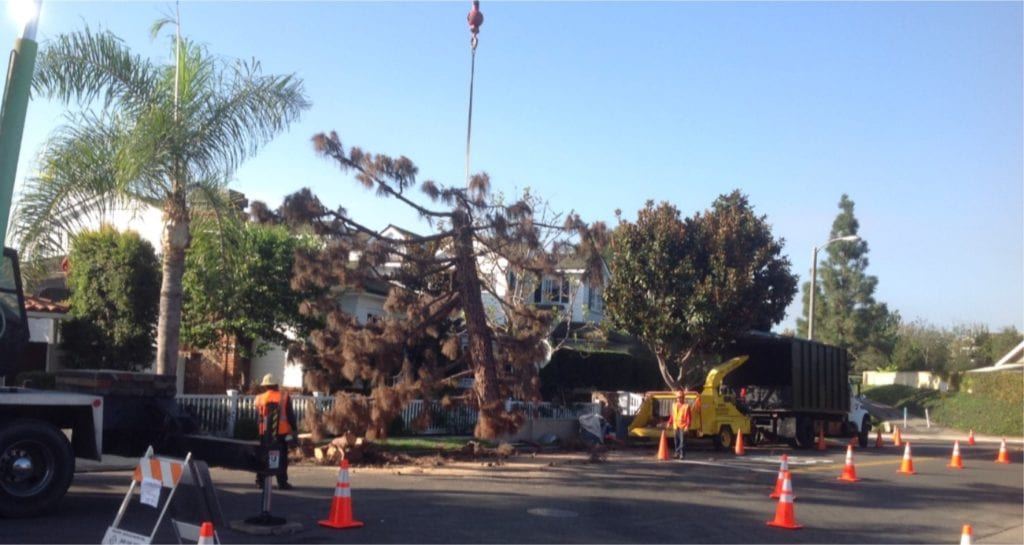 Tree Removal - Rob's Tree Service of Orange County, +1 (714) 667-6126