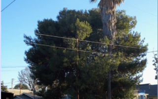 Brea Tree Service - Rob's Tree Service Orange County