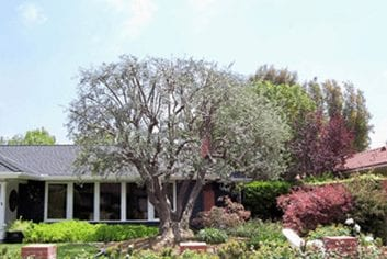 Insect and Disease Management - Rob's Tree Services of Orange County