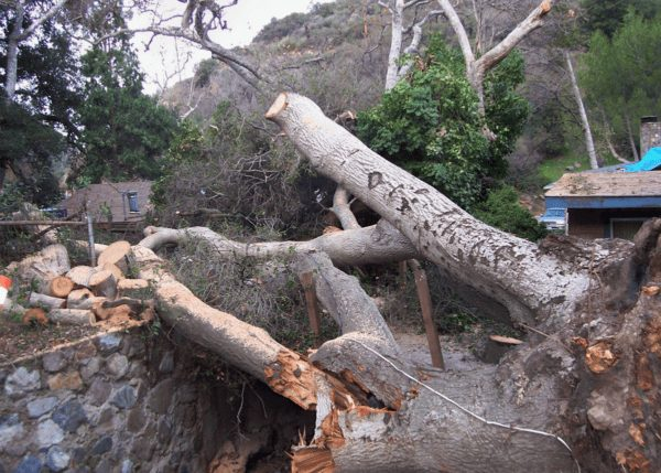 Our Gallery - Tree Trimming & Removal - Rob Tree Service Orange County