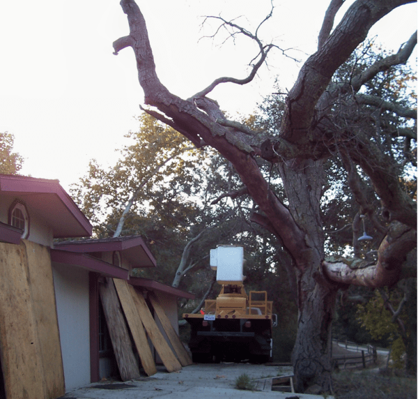 Trabuco Canyon Tree Service - Rob's Tree Service of Orange County