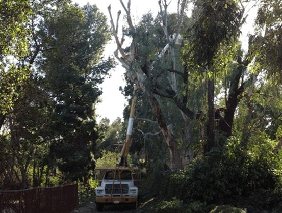 TFountain Valley Tree Services Removal -Robs Tree Service Orange County