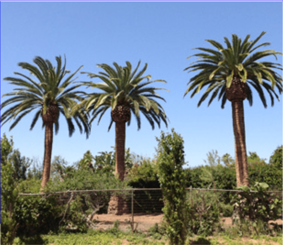 Seal Beach Tree Service, Removal - Rob;s Tree Service of Orange County
