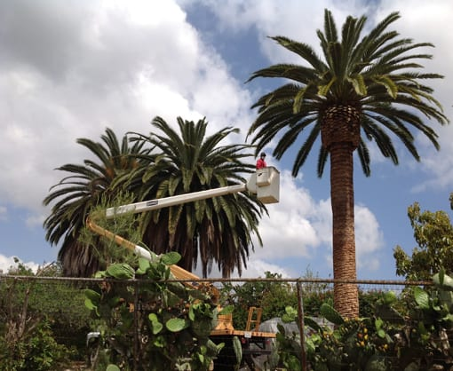 About Rob's Tree Services of Orange County - Call us +1 (714) 667-6126